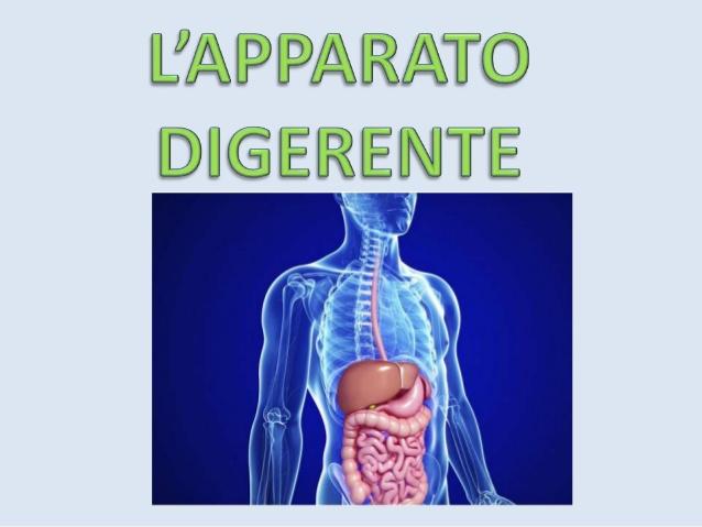 apparato-digerente-nadia-1-638