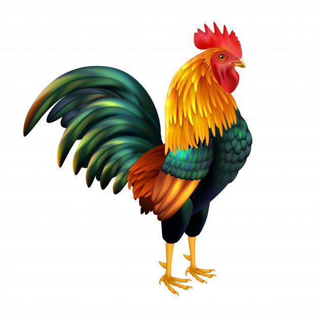 gallo-realistico-colorato_1284-10245